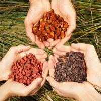 Какво е суперхрана и кои суперхрани предлага АкваСорс?